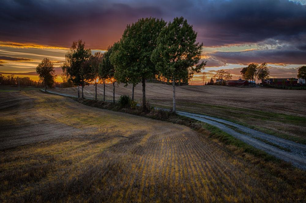 Yellow fields. Photo: John Einar Sandvand
