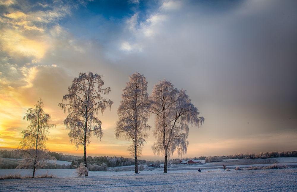 Winter trees. Photo: John Einar Sandvand