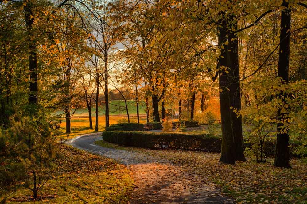 Høst ved Universitetet. Foto: John Einar Sandvand