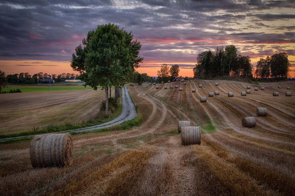 Høst i åkeren. Foto: John Einar Sandvand
