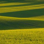 Photographing farm waves in the evening sun