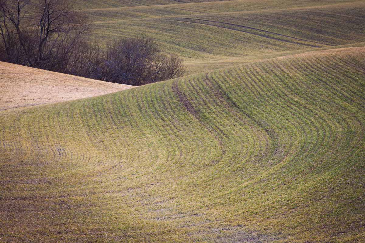 Also in Kroer earlier in the spring, but in this shot I included a line of trees I felt fit nicely into the farm waves. Photo: John Einar Sandvand